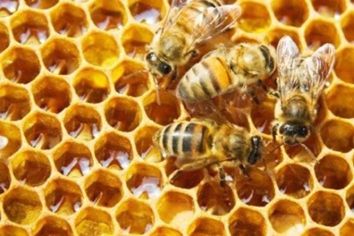 apiculteur kirbon