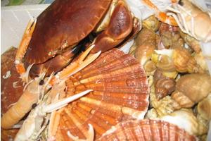 Eat with locals: Les vraies coquilles st jacques de dieppe, toutes fraiches, c'est pour...